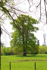 Versailles - 10 dans le parc du Chteau, la ferme de Marie-Antoinette (paspog) Tags: france spring versailles april avril chteau parc printemps marieantoinette frhling 2016 parcduchteau hameaudemarieantoinette