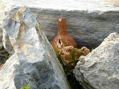 Rocky Treasures (Toats Master) Tags: port spain rocks shore ferriswheel malaga