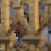 Secrets d'Histoire : tournage au château de Versailles