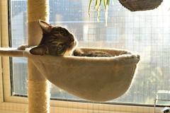 Basking (Nathan.Lane) Tags: sunlight animal cat warmth sleepy basking