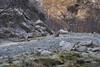 Il camoscio che va a svernare nelle Gole di Fara San Martino (CH) - Majella - Abruzzo - Italy