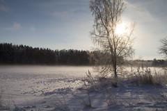 Winter day (Dencku) Tags: winter sky sun snow tree sol nature fog suomi finland landscape koivu vinter outdoor natur himmel birch bjrk talvi puu sn trd maisema lunta luonto landskap dimma aurinko sumu porkala taivas kirkkonummi ulkona utomhus porkkala kyrksltt friggesby