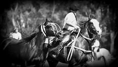 La madrina oscura (Eduardo Amorim) Tags: horses horse southamerica argentina criollo caballo cheval caballos cavalos pferde herd cavalli cavallo cavalo gauchos pferd ayacucho chevaux gaucho cavall  amricadosul gacho amriquedusud provinciadebuenosaires  gachos  sudamrica suramrica amricadelsur sdamerika crioulo caballoscriollos criollos  tropillas buenosairesprovince americadelsud tropilhas tropilla crioulos cavalocrioulo americameridionale tropilha caballocriollo eduardoamorim cavaloscrioulos