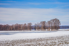 Snowy Field (Wits End Photography) Tags: blue trees winter light shadow sky white snow plant cold tree nature weather bench still frost quiet seat smooth restful peaceful objects calm freeze blanket serene icy seating relaxed tranquil gentle soothing