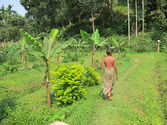 IMG_6974.jpg (Kuruman) Tags: sylhet bangladesh srimangal