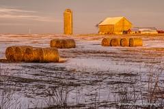 Iowa farm early morning light (Thomas DeHoff) Tags: snow barn rural corn farm sony iowa bales stalk a700