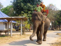 Back Home Again (RickyZ2010) Tags: elephantride mahout buddhistmonk elephantvillage surinprovince elephantstudycenter