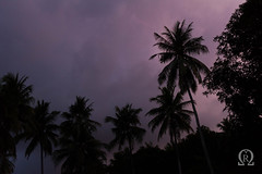 Purple skies (Michal Renee) Tags: sky storm rain night indonesia evening rainforest southeastasia moody cloudy coconut rainy palmtree monsoon beforethestorm approaching rainyseason pruple wetseason