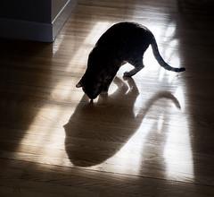 treats! (marianna armata) Tags: light shadow silhouette cat floor jazz treat topview