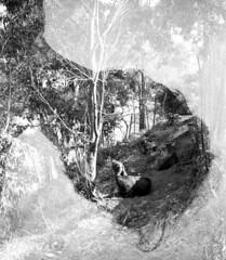 Accident photographique (Cline Prune) Tags: silhouette espagne contour homme tte chvres overprint surimpression