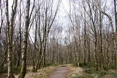2015-02-22 Ben Lomond (kenye-east) Tags: west way scotland ben scottish highland lomond benlomond munros westhighlandway munro scottishhighlands rowardennan