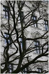 blue windows (piktorio) Tags: blue windows winter black reflection tree berlin nature architecture facade kreuzberg germany bluesky piktorio