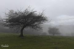 Das de lluvia (Txulalai) Tags: naturaleza nature landscape paisaje bilbao montaa bizkaia euskadi basquecountry pagasarri