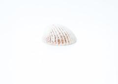 Shell (Algots) Tags: white shell highkey sncka vit fotosondag fs160207