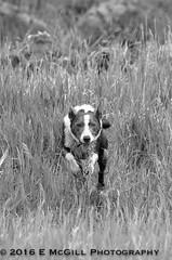 DSC_3021 (erinmcgillphotography) Tags: dog hayek