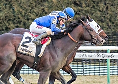 Shagaf over Laoban in the 2016 Gotham (EASY GOER) Tags: horses horse sports canon track racing aqueduct 5d 56 equine thoroughbreds 400mm markiii