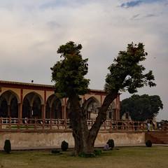 Peace tree at Shahi Qila (Saifuddin Abbas) Tags: trees winter pakistan sunset fort lahore shahiqila qila