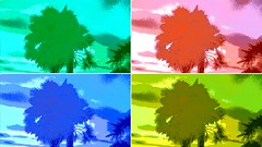 Coloured Palm Trees, Vancouver (catherinecordoni) Tags: trees collage dvd colorful palm palmtrees cover colourful cdcover dvdcover