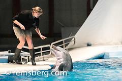 Environmental Portrait photography of Lyle Benson - Baltimore Maryland (Remsberg Photos) Tags: show usa aquarium marine dolphin maryland baltimore tricks perform youngwoman trainer oneperson nationalaquarium aquaticlife