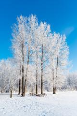 Frosty Wonderland (Nelepl (away)) Tags: park trees snow canada season scenery frost hoarfrost manitoba jackfrost birdshillpark