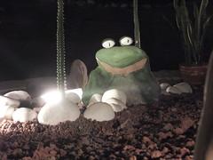 Made me jump (stevenbrandist) Tags: travel night mexico concrete hotel decoration frog holidayinn creature travelogue tuxpan
