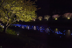 20160305-DSC_2206.jpg (d3_plus) Tags: street sea sky plant flower nature japan spring nikon scenery nightshot cloudy bloom  cherryblossom  sakura lightup nightview 28105mmf3545d nikkor    shizuoka    izu   28105   rapeblossom    28105mm  zoomlense  minamiizu    kawazuzakura    28105mmf3545 d700 281053545  nikond700 shimokamo aiafzoomnikkor28105mmf3545d nightcherryblossom 28105mmf3545af    southcherryblossomandrapeblossomfestival aiafnikkor28105mmf3545d shootingstarsandsakurainnight sakurainnight