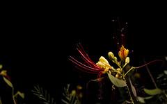 Light (PachecoFerrada) Tags: flowers light cajondelmaipo