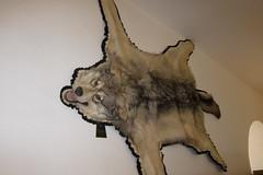 Wolfskin rug (quinet) Tags: germany taxidermy 2012 kulmbach castleroad empaillage burgenstrase prparatoren plassenburgcastle plassenburgzinnfigurenmuseum