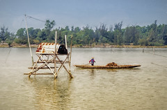On the Way To Da Nang 2 (Artypixall) Tags: man rural bay boat vietnam getty rowing faa oysterpark oysterharvest