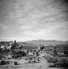Ryan Ranch, No. 4 (a.k.a. Flash) Tags: 120 film landscape holga ruins december scan joshuatreenationalpark 2015 ryanranch