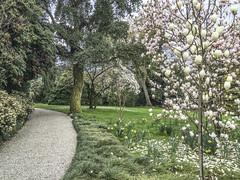 Lago maggiore : Isola Madre -Botanical Gardens (sandromars) Tags: italy italia piemonte botanicgarden lagomaggiore verbania giardinobotanico isolamadre