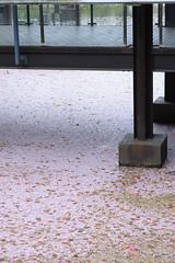 20160410-DSC_8462.jpg (d3_plus) Tags: sky plant flower history nature japan trekking walking temple nikon scenery shrine bokeh hiking kamakura fine daily bloom  28105mmf3545d nikkor    kanagawa   shintoshrine   buddhisttemple dailyphoto   thesedays kitakamakura  28105   fineday   28105mm  historicmonuments  zoomlense ancientcity       28105mmf3545 d700 281053545 nikond700  aiafzoomnikkor28105mmf3545d 28105mmf3545af aiafnikkor28105mmf3545d
