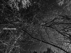 Jackson Pollock Noir (Trevdog67) Tags: trees nature forest woods noir arch branches jackson newbrunswick fallen moncton nouveaubrunswick pollock hdr jacksonpollock iphone mapletonpark iphone6 parcmapleton
