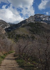 I Hope For The Higher Road (LeBaroDea) Tags: road trees pine forest utah path scenic rocky trail majestic quartzite steep mountolympus millcreek northpeak saltlakevalley neffscanyon mountolympuswilderness saltlakecounty olympuscove lebarodea