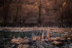 Petit lac de Tami (imagene74) Tags: lacs roseaux poselongue atmosphre