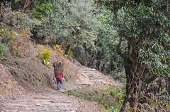 DSC_4750 (jdcruzba) Tags: nepal nikon sigma abc annapurna annapurnabasecamp d5100