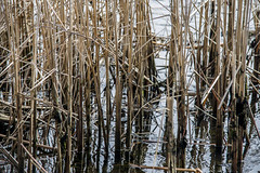 DSC_4811 (kabatskiy) Tags: city urban lake nature landscape spring dump minimal marsh abstracts