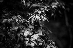 Acero (VioletHippie) Tags: black e whit bianco nero acero