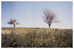2016, Spring (Italian Film Photography) Tags: trees sky primavera film colors grass alberi spring kodak erba fujifilm analogue portra colori analogica wellness c41 pellicola fioriti gw690ii colorchem
