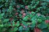 C1_2016-157618 (HamimCHOWDHURY  [Read my profile before you fol) Tags: pink flower nature srinagor hamimchowdhury framebangladesh hijolphool