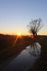 Tramonto nei campi (big.mattia) Tags: sunset orange sun milan tree nature water colors photo tramonto milano natura campi cusago