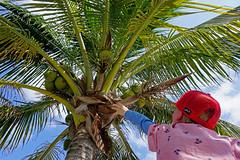 Puerto Morelos (benjaminfish) Tags: beach mexico puerto riviera maya yucatn peninsula roo morelos quintana 2016