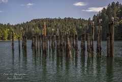 Purple Martin nest boxes on 100+ year old cement dock pilings at Tod Inlet. (Freshairphotography) Tags: history birds reflections interesting vancouverisland pilings wilderness intertidal swallows birdhouses oases endangeredspecies purplemartins wildbird gowlandtoddpark gowllandtodpark todinlet explorebc ilovebc cementpilings explorevancouverisland