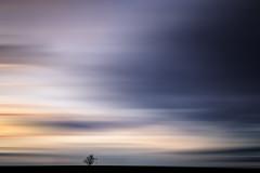 Fast single tree (Gruenewiese86) Tags: art speed germany landscape deutschland sonnenuntergang himmel wolken minimal tamron landschaft harz 1530 sachsenanhalt minimalismus