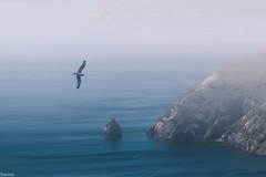 Brave (Siminis) Tags: sea mist rock seagull aegean seashore mytilene aegeansea siminis