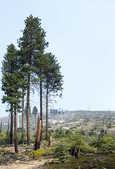 Road to Yosemite (paulabarrickman) Tags: california road park trees mountains landscape national yosemite redwoods