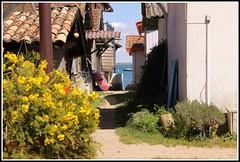 Village ostricole de l'Herbe (Les photos de LN) Tags: fleurs ruelle bateau plage alle bassindarcachon pcheurs cabanes lherbe aquitaine impasse borddemer