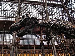 Tyrannosaurus Rex (pefkosmad) Tags: uk england building museum architecture skeleton university dinosaur naturalhistory study oxford bones neogothic oxfordshire trex tyrannosaurusrex prehistory universityofoxford