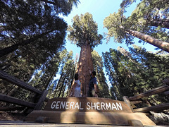 Drzewo Generała Shermana | General Sherman Tree