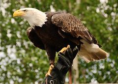 Big bird! (alex.vangroningen) Tags: bokeh nikond7000 nikon18200mm supershot wow